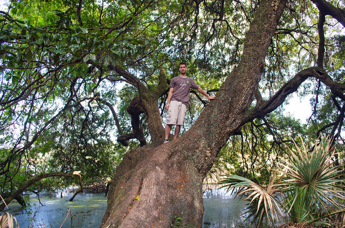 Brad climbing a tree at Magnolia Plantation in Charleston South Carolina