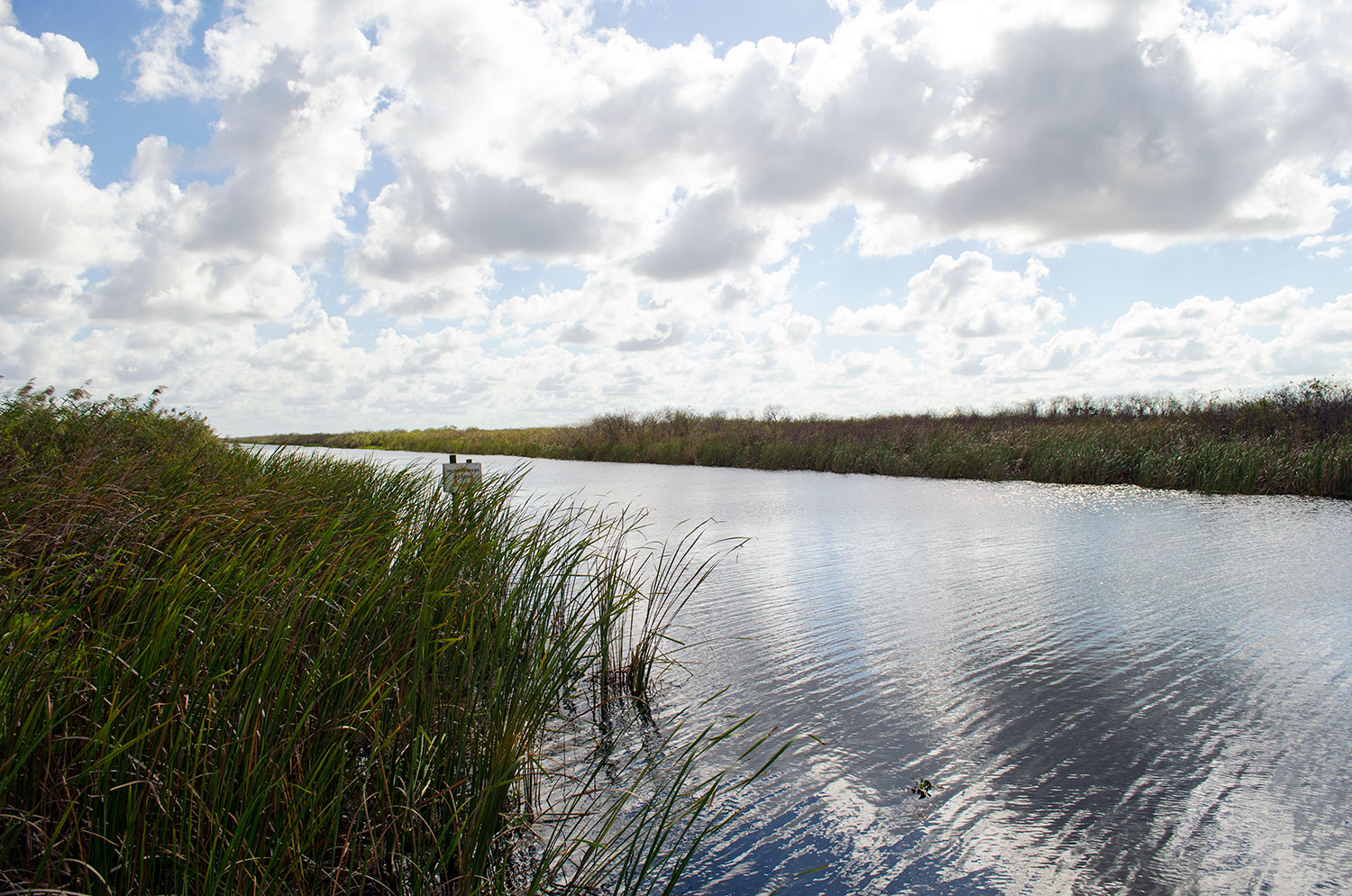 The water at Loxahatchee National Wildlife Refuge in Palm Beach County Florida