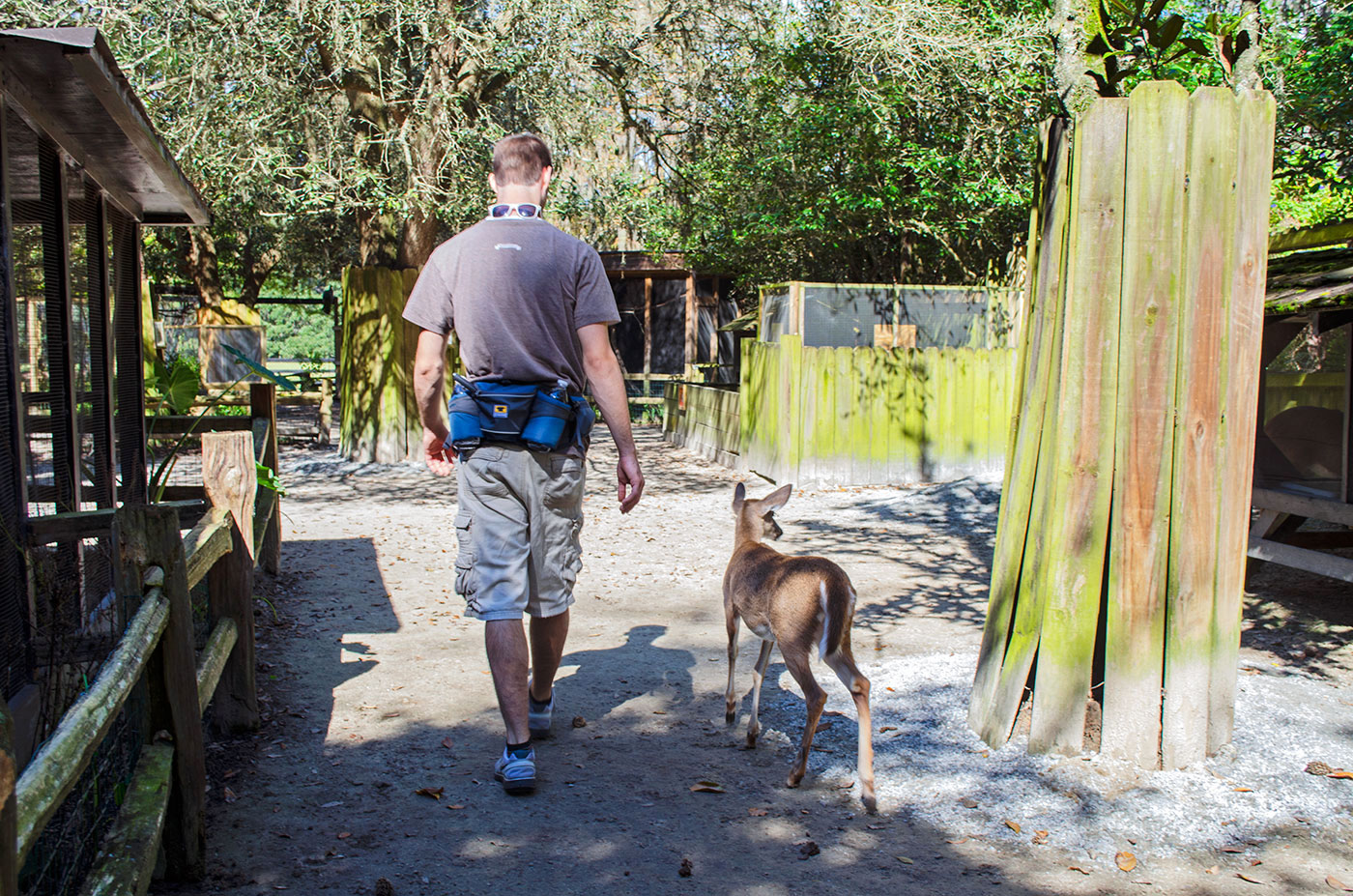 Brad walking with a White-Tailed Deer at the Magnolia Plantation petting zoo near Charleston, South Carolina
