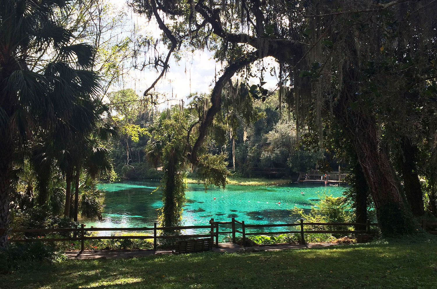 A view of clear blue water at Rainbow Springs State Park in Dunnellon Florida