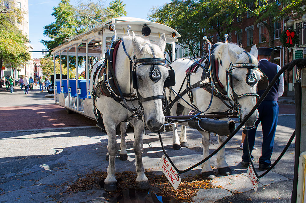 Two horses at Riverfest in Wilmington North Carolina
