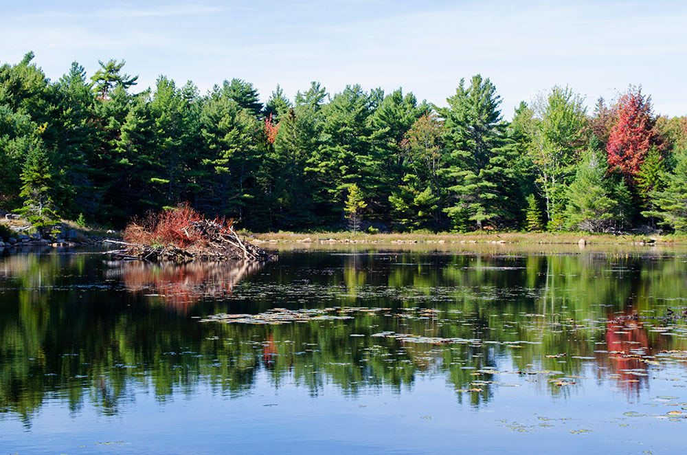 Beaver Dams on a lake in Acadia National Park