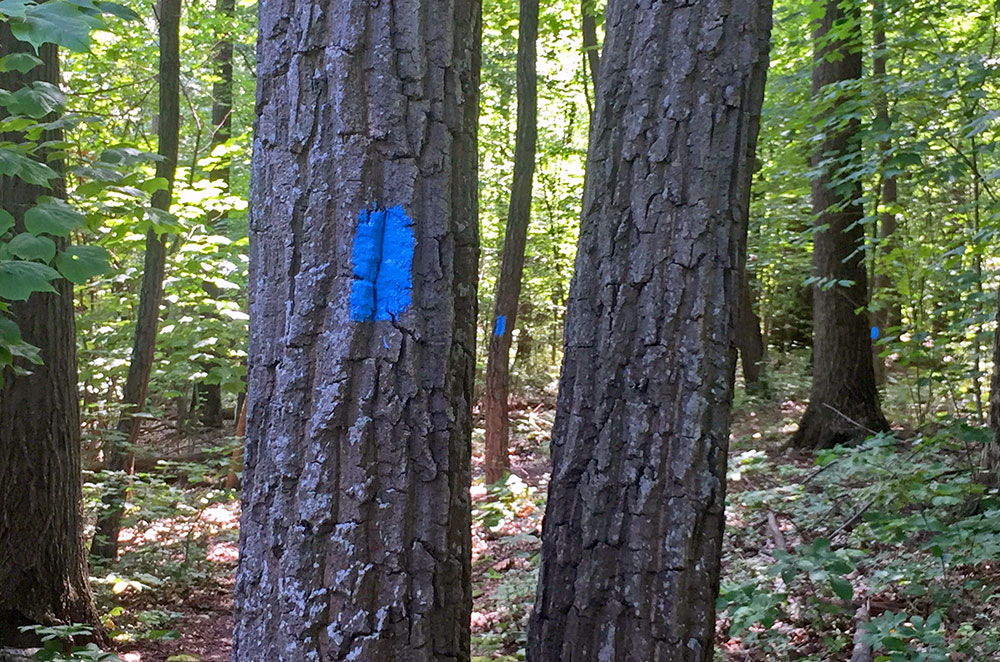 Always follow the trail markers on Mount Nittany in State College Pennsylvania