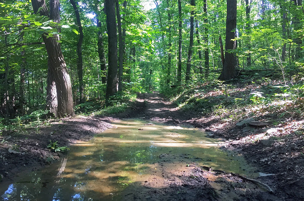 A muddy path on Mount Nittany in State College Pennsylvania