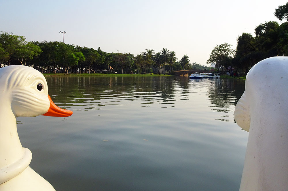 On the third day of our three days in Bangkok we rode a swan boat in Chatuchak Park