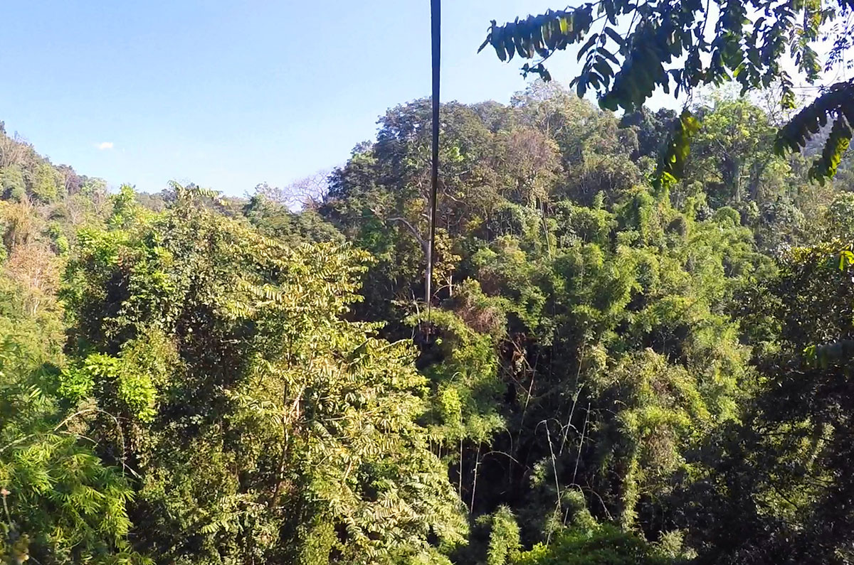 The view from the top of a zip line at Flight of the Gibbon Chiang Mai