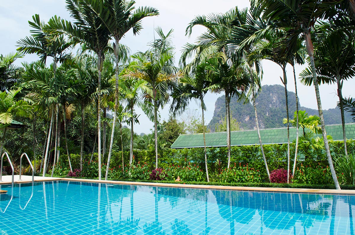 Palm trees behind the pool at Aonang Bunk Resort in Krabi Thailand