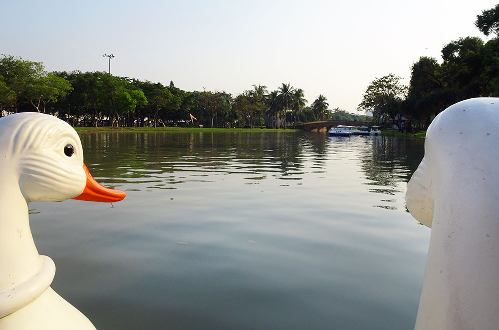 Riding one of the swan-shaped paddle boats in Chatuchak Park
