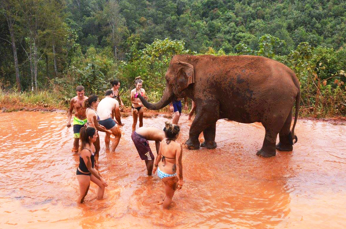 People bathing with elephants at Elephant Jungle Paradise Park in Chiang Mai
