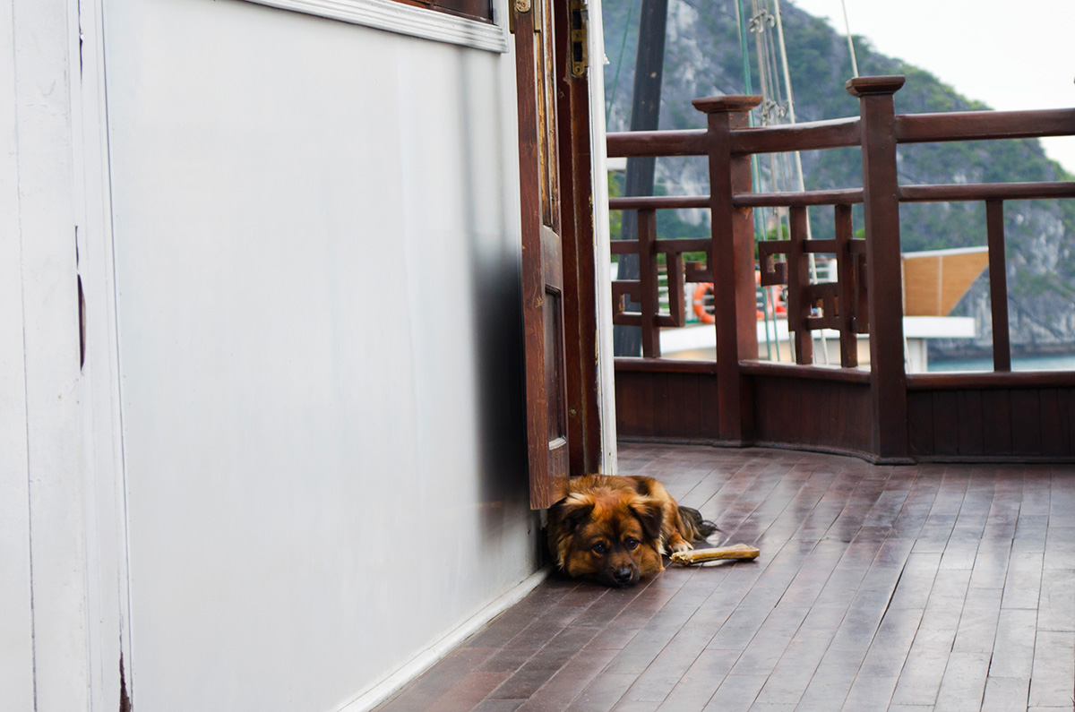 A cute dog laying near the captains quarters of the Oriental Sails Calypso Cruiser