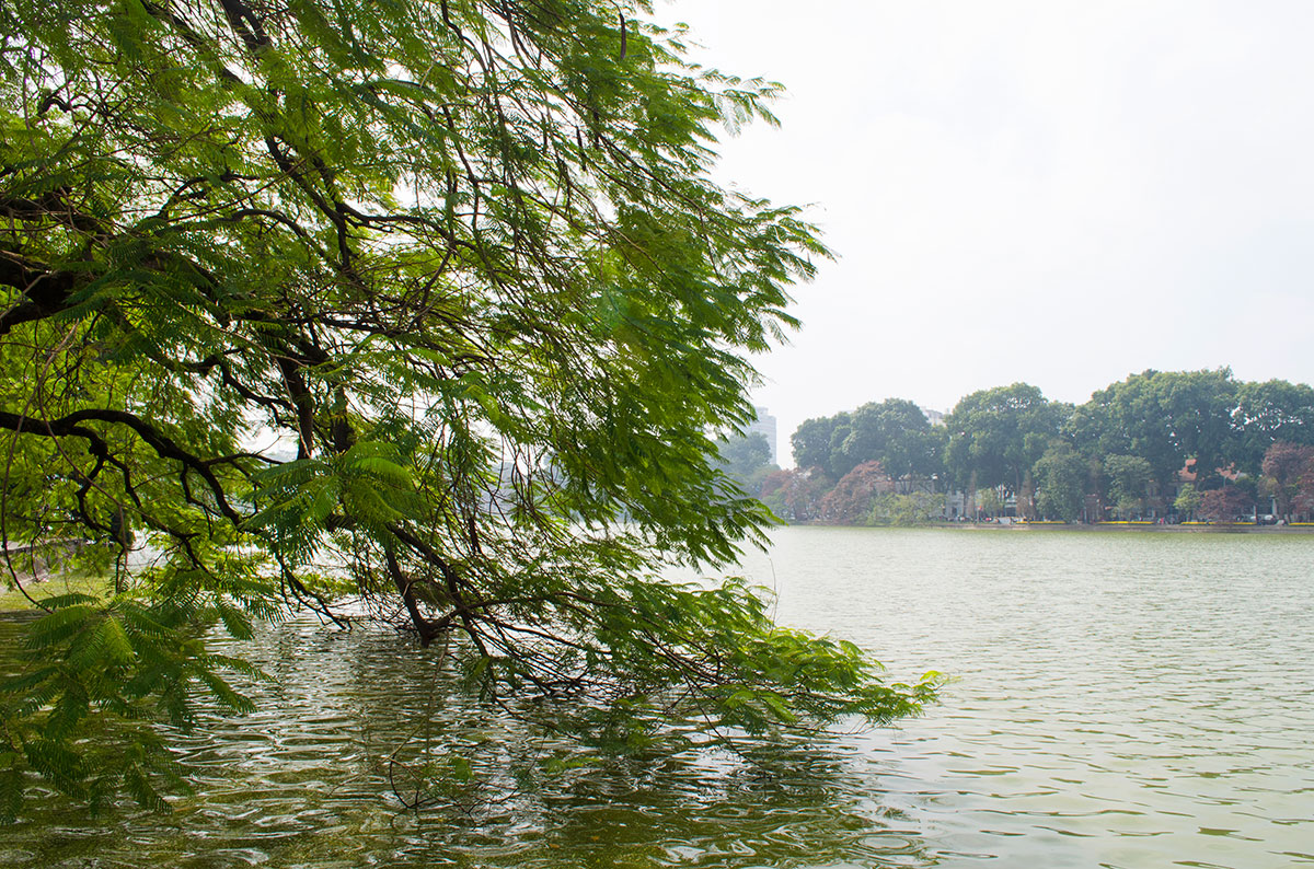 A tree hanging into the Lake of the Restored Sword in Hanoi
