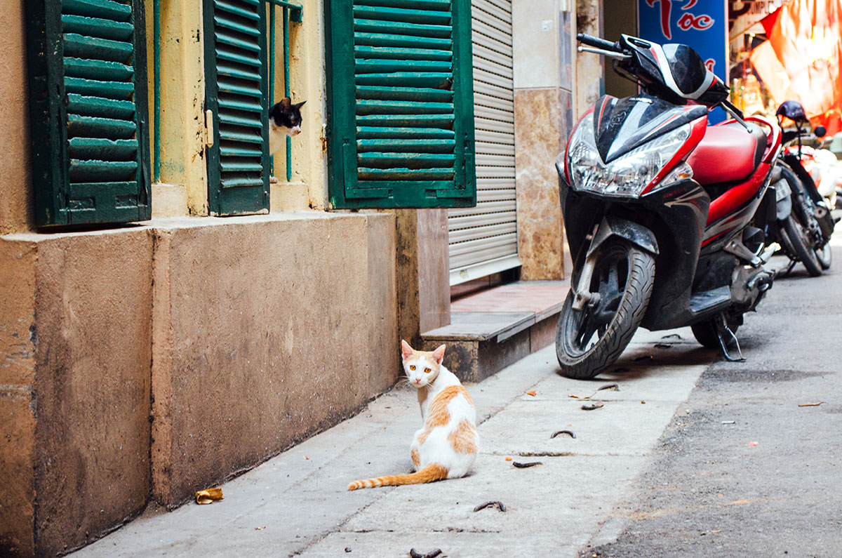 Two cats on a street in Hanoi Vietnam