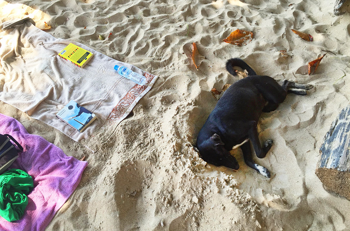 A stray dog sleeping near our towels on Long Beach in Koh Lanta Thailand