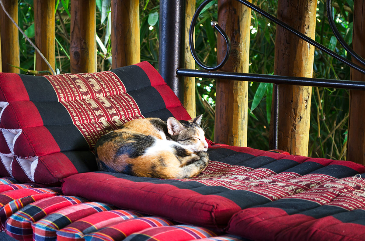 A cat sleeping in the common area at Happy House Pai hostel
