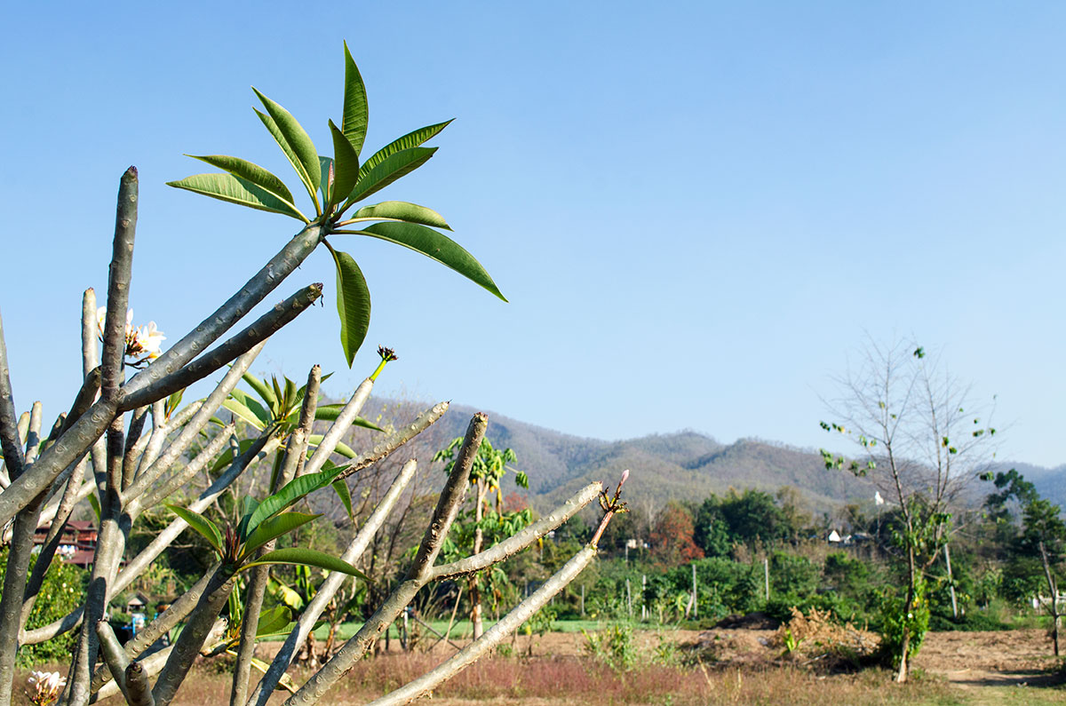A tree with mountains in the background in Pai